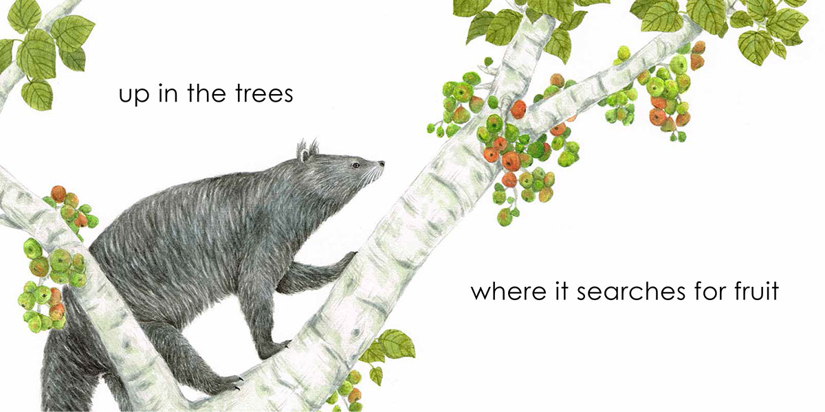 Borneo Animals - Binturong, picture book by Beverley Hon, illustrated by Lim Lay Koon