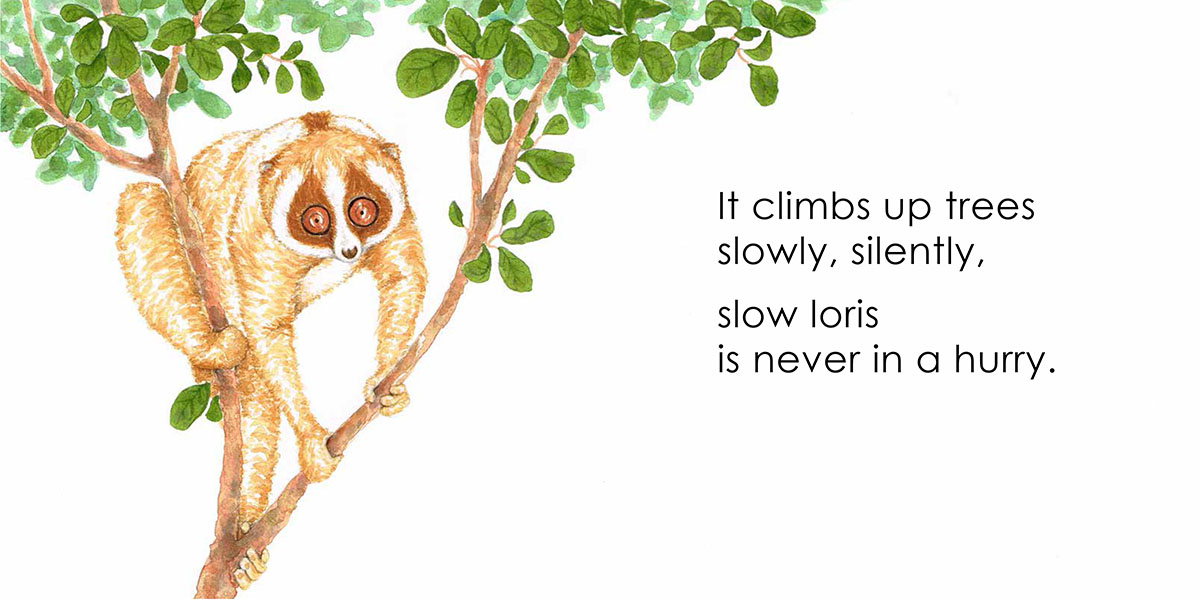 Borneo Animals - Slow Loris, picture book by Beverley Hon, illustrated by Lim Lay Koon